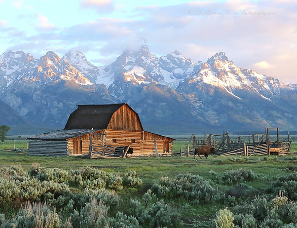 Grand Tetons & Colorado &Utah 2013