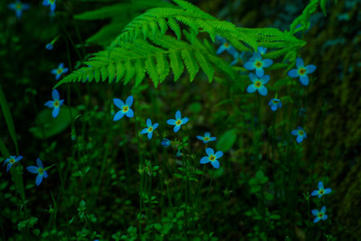 Bluettes and ferns