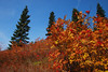 More amazing fall colors on the way to the Granite Mountain lookout with the moon in the distance.
