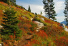 Amazing fall colors on the hike to Granite Mountain