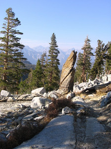 The base of an old snag along the trail, looking north.