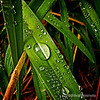 Raindrops and grass...