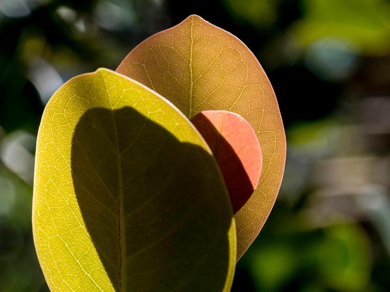 Leaf Still Life