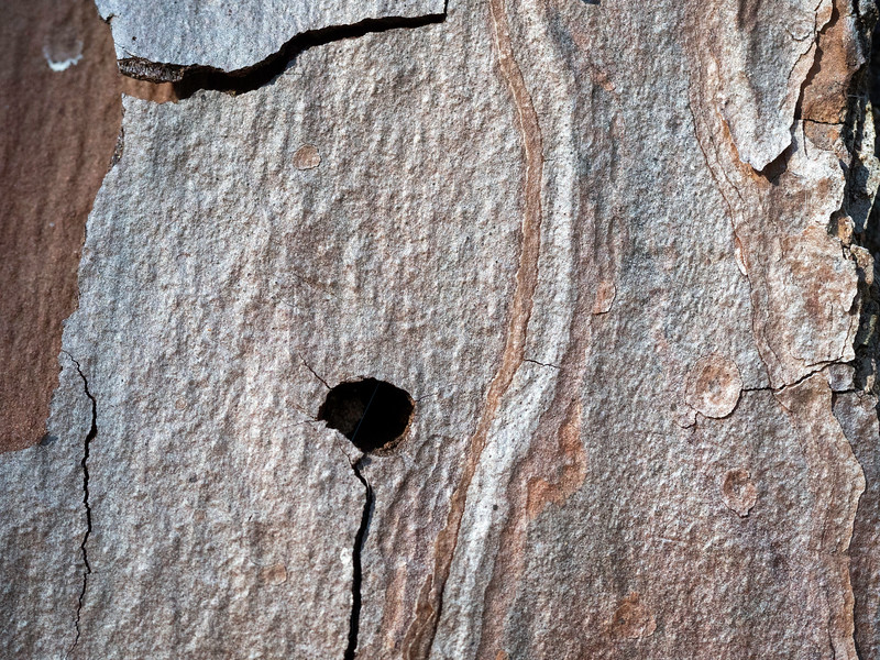 Hole in the Bark