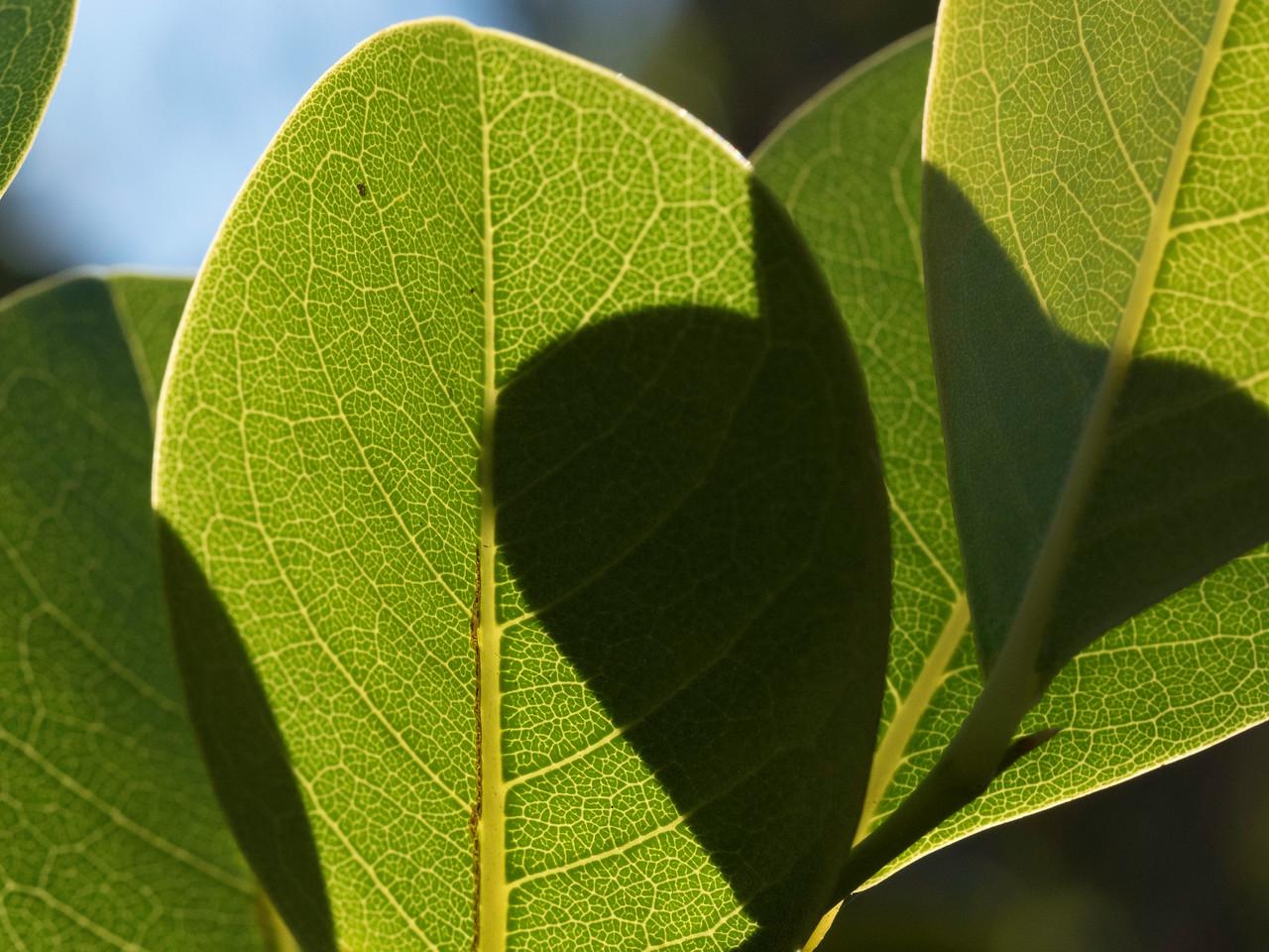 Leaf Still Life #2