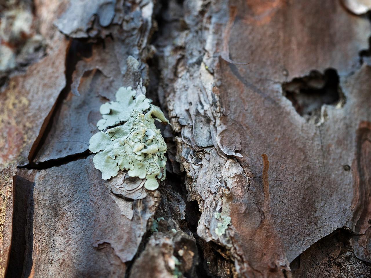 Liking the Lichen