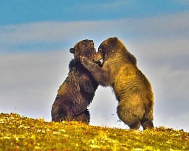 Wrestling & Fishing Bears