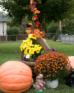 pumpkins-4924