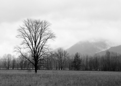 Tree In Cades Cove - Black & White