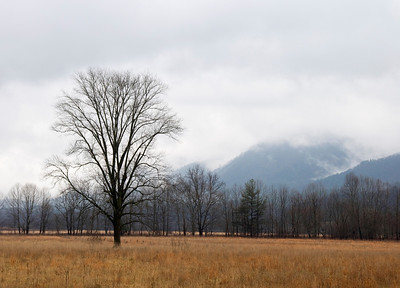 Tree In Cades Cove