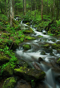 Spring Cascade, Newfound Gap Road, Great Smoky Mountains