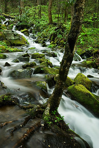 Heavy rains turned a small cascade into a river.  Newfound Gap Road, Great Smoky Mountains, near Cherokee, NC.