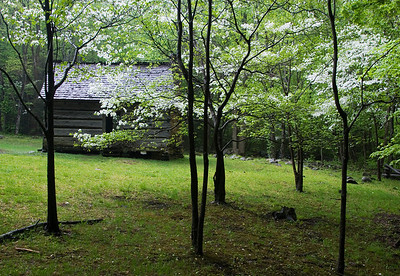 Cabin In The Dogwoods, Roaring Fork Motor Nature Trail, Great Smoky Mountains