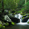 Forest Scene At Roarking Fork, Great Smoky Mountains
