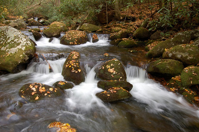 Great_Smoky_Mts_2006-10-26_60