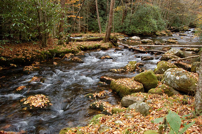 Great_Smoky_Mts_2006-10-26_35