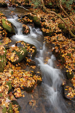 Great_Smoky_Mts_2006-10-26_51