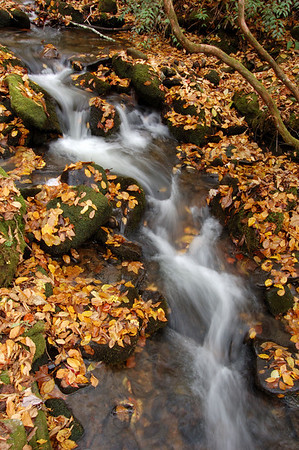 Great_Smoky_Mts_2006-10-26_50