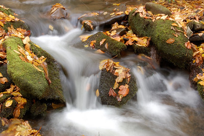 Great_Smoky_Mts_2006-10-26_59