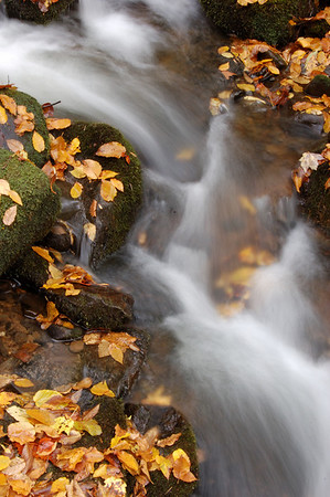 Great_Smoky_Mts_2006-10-26_52