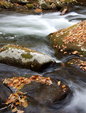 Great_Smoky_Mts_2006-10-26_47