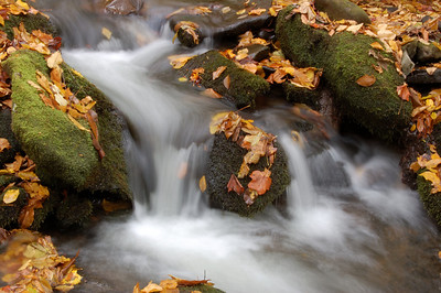 Great_Smoky_Mts_2006-10-26_57
