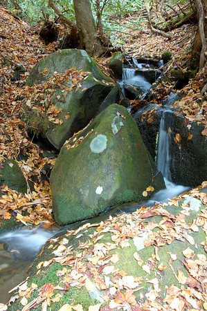 Great_Smoky_Mts_2006-10-26_32