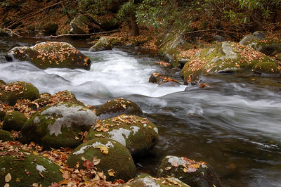 Great_Smoky_Mts_2006-10-26_49