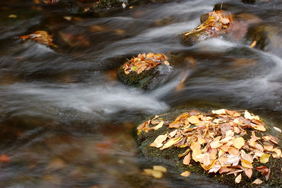 Great_Smoky_Mts_2006-10-26_39