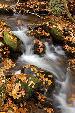 Great_Smoky_Mts_2006-10-26_53