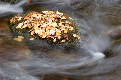 Great_Smoky_Mts_2006-10-26_38
