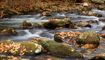 Great_Smoky_Mts_2006-10-26_45