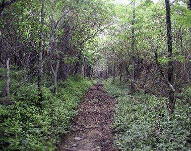 Russell Field Trail, GSM, TN