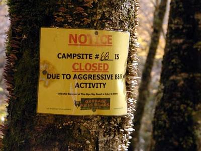 Aggressive Bear Activity Warning Along Forney Creek. Campsite 68 was closed because of bears!