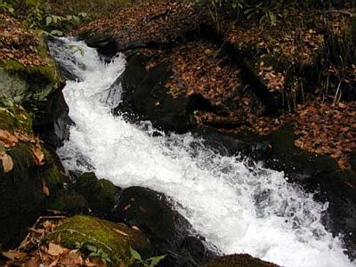 Lower Gutter of Hazel Creek Cascade in the Great Smoky Mtns.