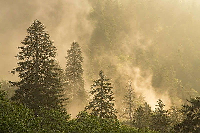 Mountain on Fire.  Backlit Fog in Great Smoky Mountains National Park