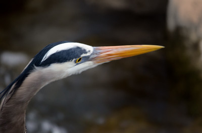 Heron-4
