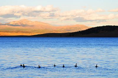 Hebgen Lake GYE #121