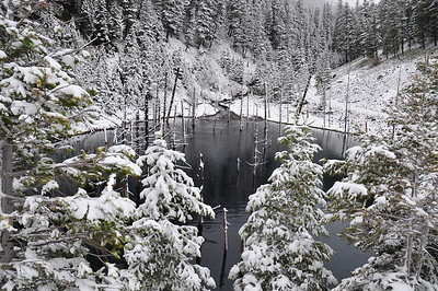 Montana spring II GYE #94