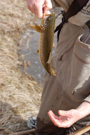 Fishy_2007-03-23_34