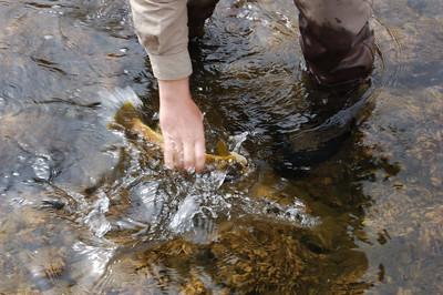 Fishy_2007-03-23_1