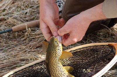 Fishy_2007-03-23_33