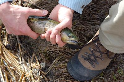Fishy_2007-03-23_28