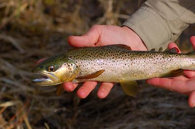 Fishy_2007-03-23_27
