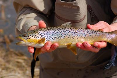 Fishy_2007-03-23_35