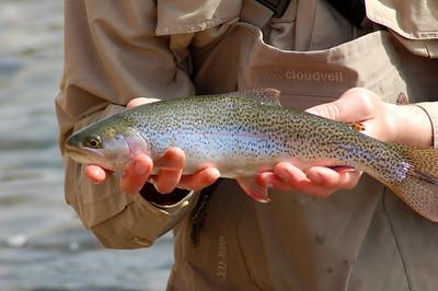 Fishy_2007-03-23_23