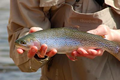 Fishy_2007-03-23_24