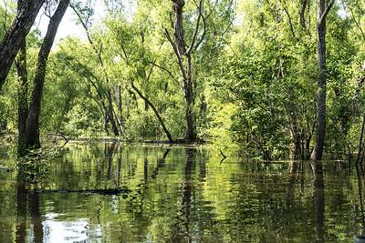 Atchalafaya Basin, Louisiana