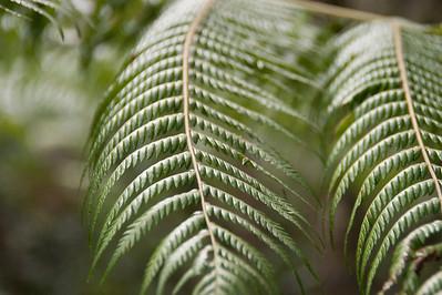 Ferns, Paihia, New Zealand