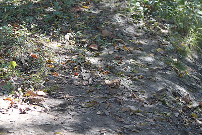 Just leaves and dirt?  Look closely to find all nine birds.